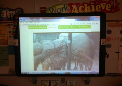 Observing Animals on Live Web Cams!