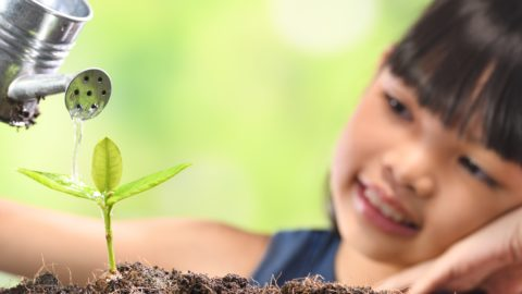 11 Plant Videos for PreK-3 Students